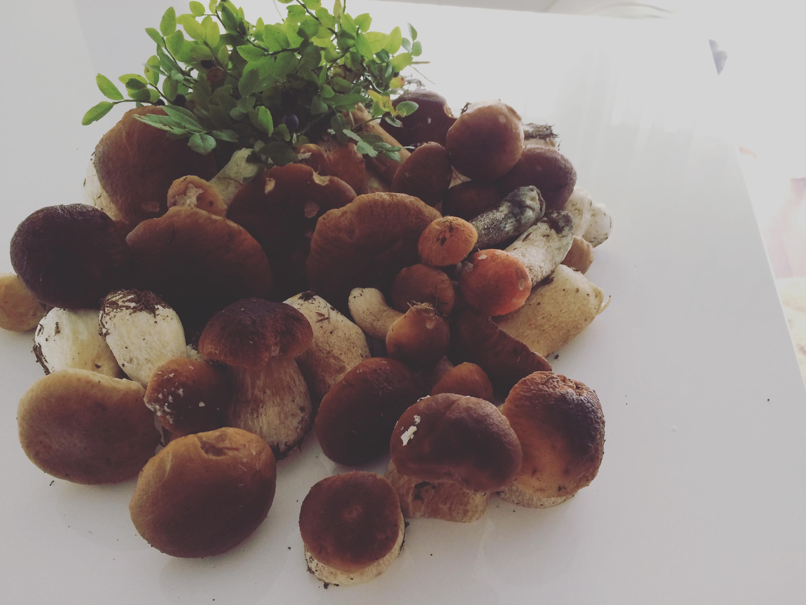 солянка грибная салат на зиму