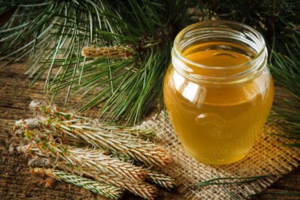 сосновое варенье с медом