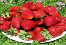 Подкормка клубники и земляники весной для большого урожая