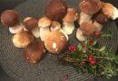 Как правильно сушить и хранить грибы в домашних условиях