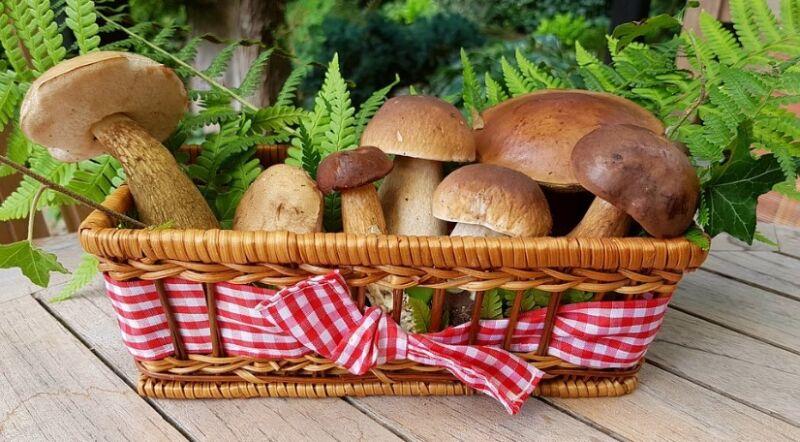 Как приготовить грибной суп из свежих грибов — 6 рецептов приготовления